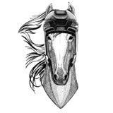 Cavallo, hoss, cavaliere, destriero, hockey animale d'uso degli sport invernali di sport del casco dell'hockey dell'animale selva illustrazione vettoriale