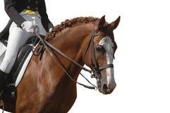 Cavallo isolato su bianco Fotografie Stock Libere da Diritti