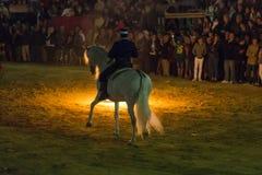 Cavallo Jerez Fotografia Stock Libera da Diritti