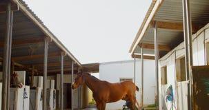 Cavallo in 4k stabile archivi video