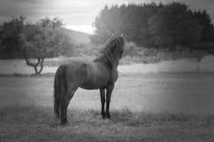 Cavallo malinconico osservando il paesaggio in bianco e nero fotografie stock