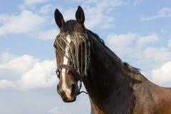 cavallo marrone ad un recinto chiuso fotografia stock libera da diritti