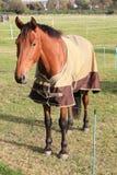 Cavallo marrone bello Fotografie Stock Libere da Diritti