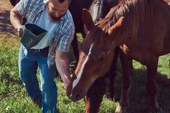 Cavallo marrone sveglio nella campagna Fotografie Stock Libere da Diritti