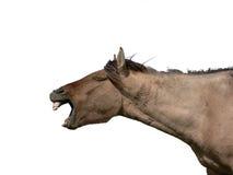 Cavallo in modo divertente Fotografie Stock