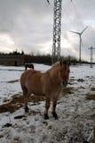 Cavallo in mondo tecnico immagine stock libera da diritti