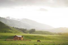 Cavallo in montagna in villaggio Nel paese Fotografie Stock