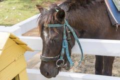 Cavallo nano Immagini Stock Libere da Diritti