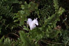 Cavallo nascosto Fotografie Stock