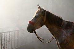 Cavallo in nebbia Fotografia Stock Libera da Diritti