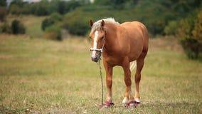 Cavallo nel campo archivi video
