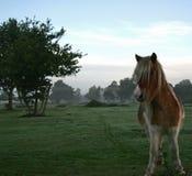 Cavallo nel campo fotografie stock