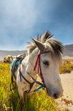Cavallo nel campo Immagine Stock