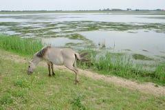 Cavallo nel campo aperto Fotografia Stock