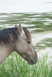 Cavallo nel campo aperto Immagine Stock Libera da Diritti