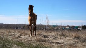 Cavallo nel campo del paesaggio scenico della natura video d archivio