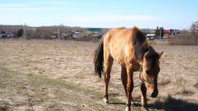 Cavallo nel campo del paesaggio scenico della natura archivi video
