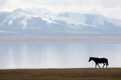 Cavallo nel lago canzone-Kul Fotografie Stock Libere da Diritti
