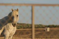 Cavallo nel paesaggio Fotografia Stock Libera da Diritti