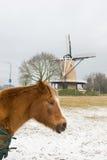 Cavallo nel paesaggio di inverno Fotografie Stock Libere da Diritti