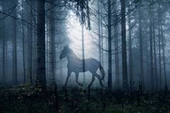 Cavallo nel paesaggio scuro della foresta di fantasia Fotografia Stock Libera da Diritti