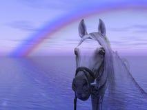 Cavallo nel Rainbow Fotografie Stock Libere da Diritti