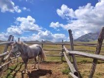Cavallo nel recinto per bestiame fotografia stock