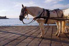 Cavallo nel vecchio porto Fotografie Stock Libere da Diritti