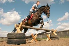 Cavallo nell'addestramento Fotografia Stock