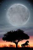Cavallo nell'ambito della luna e del tramonto Immagine Stock