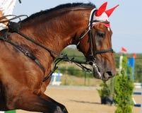 Cavallo nell'esposizione di salto fotografia stock libera da diritti