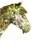 Cavallo nella foresta magica fotografia stock libera da diritti