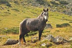Cavallo nella montagna Fotografie Stock