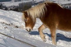 Cavallo nella neve Fotografia Stock