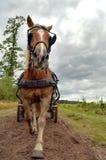 Cavallo nella parte anteriore Immagini Stock