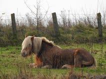 Cavallo nella prateria immagine stock