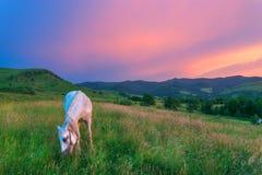Cavallo nelle montagne carpatiche Fotografia Stock Libera da Diritti