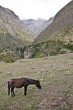 Cavallo nelle montagne Su Inca Trail a Machu Picchu Un timore Immagini Stock Libere da Diritti