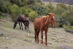 Cavallo nelle montagne Su Inca Trail a Machu Picchu Un timore Fotografia Stock Libera da Diritti