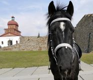 Cavallo nero Immagini Stock Libere da Diritti