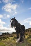Cavallo nero alla montagna Immagine Stock
