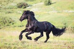 Cavallo nero che galoppa nel campo Immagini Stock Libere da Diritti