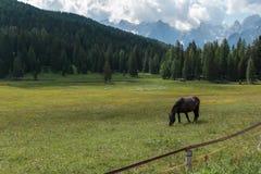 Cavallo nero che pascola nelle terre di pascolo: Paesaggio italiano delle alpi delle dolomia Fotografia Stock Libera da Diritti