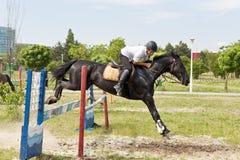 Cavallo nero che salta un ostacolo fotografie stock