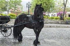 Cavallo nero che tira vagone Fotografie Stock