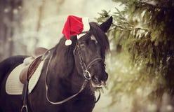 Cavallo nero del cavallo in un cappello rosso di Santa Claus Fotografia Stock