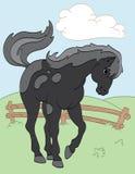 Cavallo nero nel campo Fotografia Stock Libera da Diritti