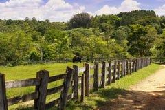 Cavallo nero nell'azienda agricola Immagini Stock