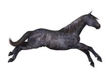 Cavallo nero su bianco Fotografia Stock Libera da Diritti