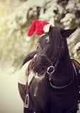 Cavallo nero in un cappello rosso di Santa Claus Fotografia Stock Libera da Diritti